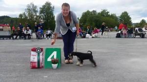BIS 4 Steinkjer hundeklubb